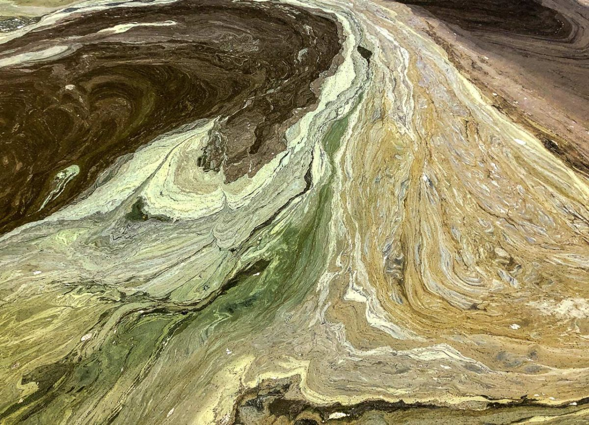 Cyanobacteria blooms on Clear Lake in June 2020 resembled whorls of green and white paint.